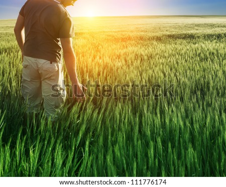 man in wheat field and sunlight - stock photo