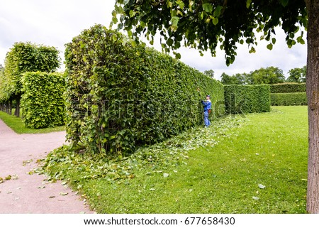 Man Cutting Trees Park Professional Gardener Stock Photo (Royalty ...