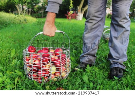Man is holding the basket of apples