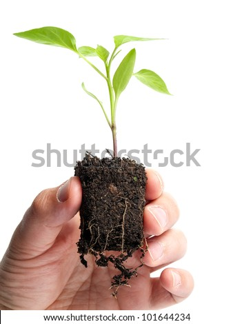 Man is holding young plant that grows in a lump of soil, isolated on a white background. - stock photo