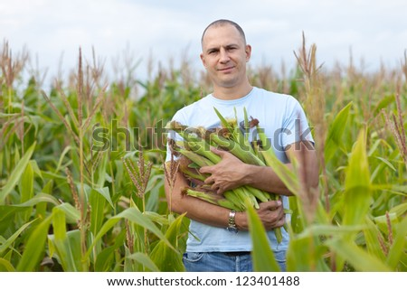 Man is standing in cornfield with hands full of corn cobs - stock photo