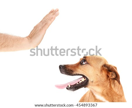 Man is training dog by stopping it