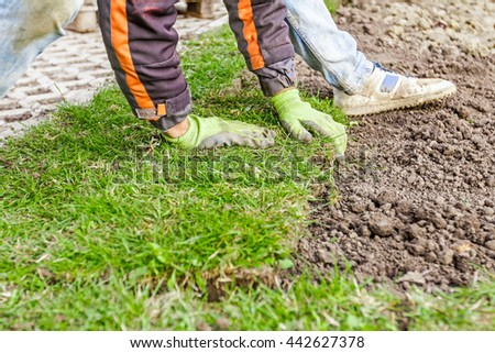 Man is unrolling laying sod for new garden lawn at a residential construction site.