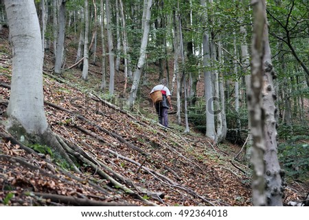 man looking for edible mushroom in the forest