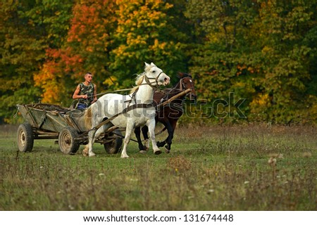 Man manages carriage horses on the field