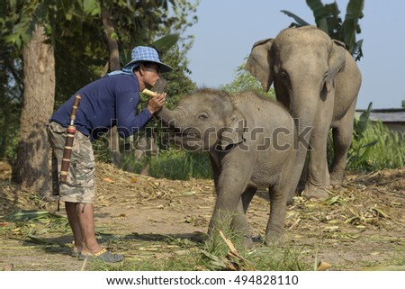 Man of love touch with elephant