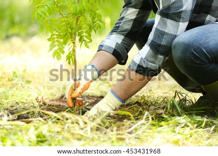 Man planting tree in garden