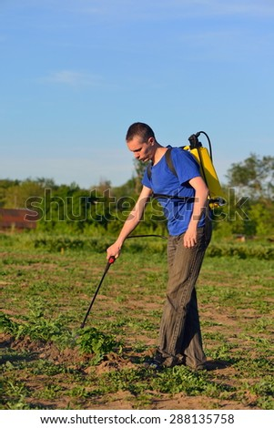 Man poisons the Colorado potato beetle - stock photo