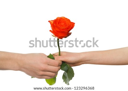man's hand giving a rose to a woman , isolated on white - stock photo