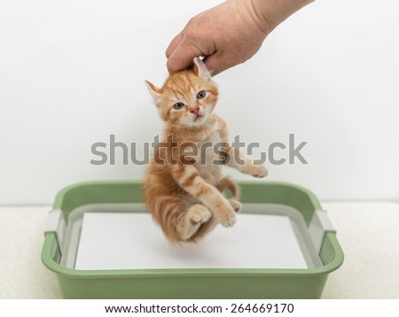 Man's hand holding a kitten in the cat litter - stock photo