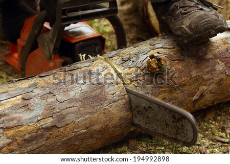 Man sawing a log in his back yard. Toned in warm color