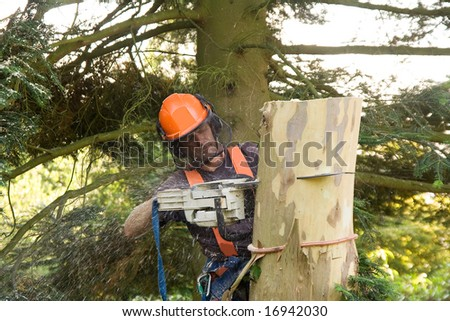 Man sawing through the trunk of a tree he has just taken down branch by branch - stock photo