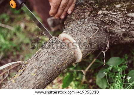 Man sawing wood for campfire in the forest. Close-up saw and lumberjack hand cutting trees outdoors. Man cutting log of wood timber to making campfire on nature. - stock photo