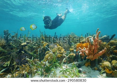 Man snorkeling underwater looks reef fish over a lush seabed with colorful marine life composed by corals and sponges in the Caribbean sea - stock photo