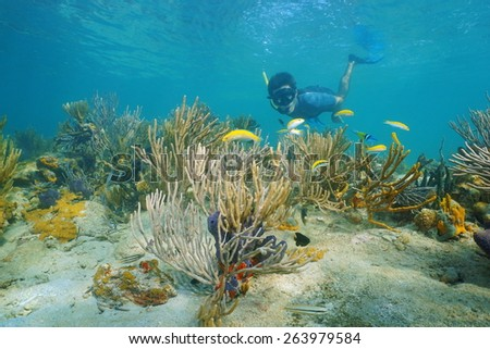 Man snorkeling underwater on a reef with soft coral and tropical fish, Caribbean sea, Panama - stock photo