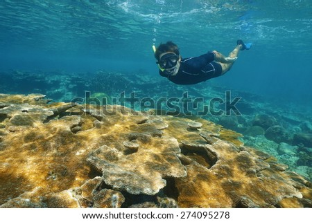 Man snorkeling underwater over tropical reef with large elkhorn coral in the Caribbean sea, Mexico - stock photo