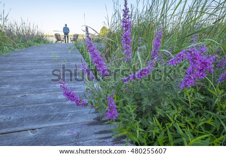 Man Standing by Two Adirondack Chairs on a Boardwalk