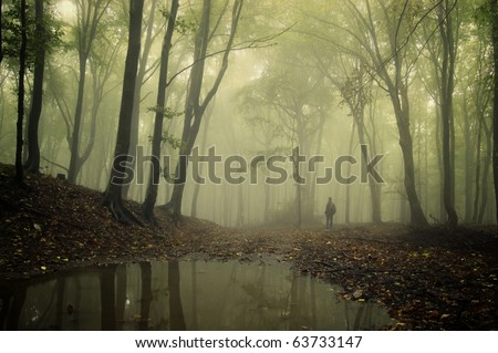 man standing in a green forest with fog and trees reflecting in water - stock photo