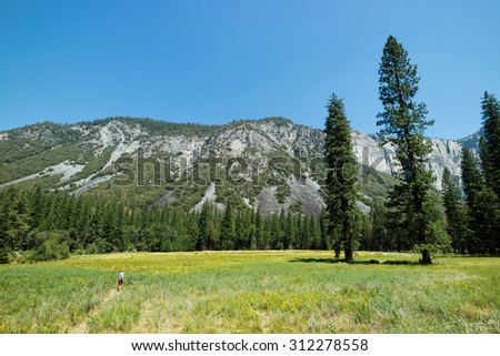 Man standing looking at giant trees in Yosemite National Park Valley on beautiful summer day surrounded by huge mountains and lush greenery