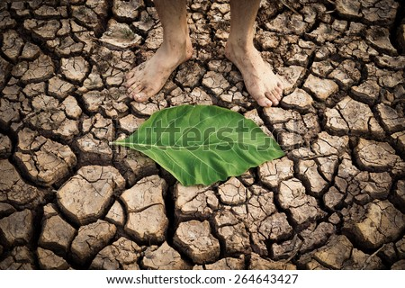 man standing on a dry cracked earth with green leaf on the ground