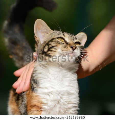 man stroking a small kitten - stock photo