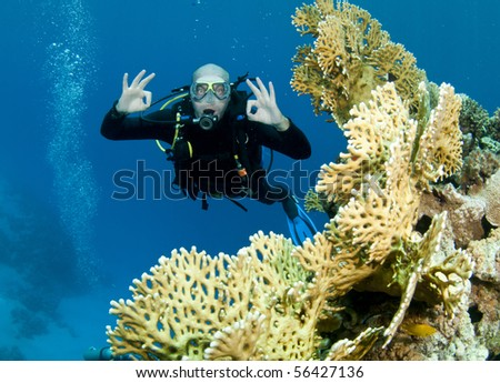 man swimming on reef in red sea - stock photo