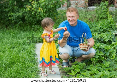 Man tears strawberries in the garden