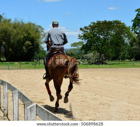 Man training with his horse