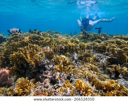 Man underwater snorkeling in a shallow coral reef of the Caribbean sea - stock photo