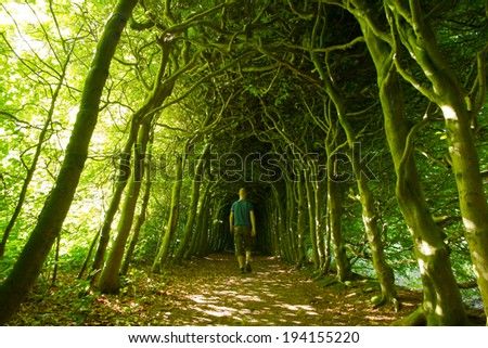 Man walking in a green tunnel of trees on a nice summer's day. - stock photo