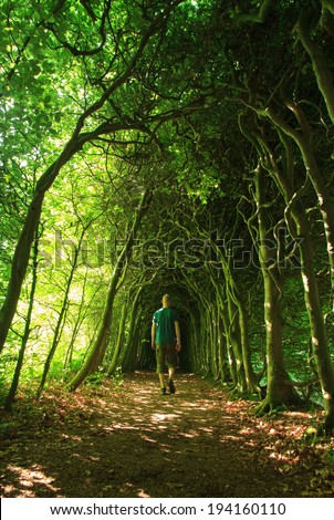 Man walking in a green tunnel of trees on a nice summer's day.