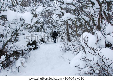 Man walking on a footpath surrounded with snow covered branches