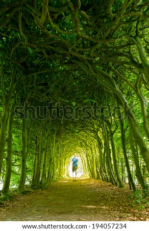 Man walking towards the light in a green tunnel of trees on a nice summer's day. - stock photo