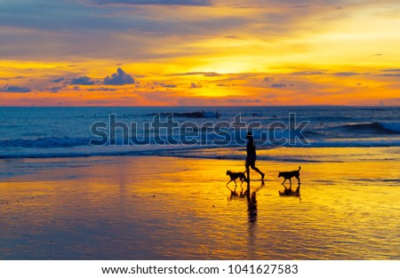 Man walking with the dogs on a beach at sunset. Bali island, Indonesia
