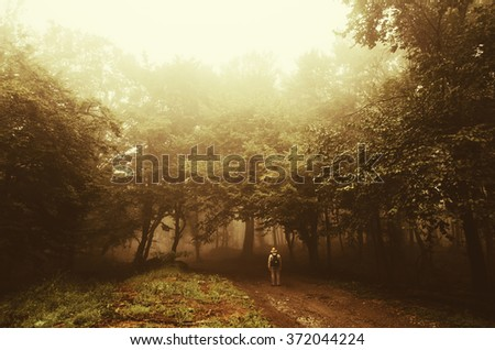 man wandering in golden sunset light in forest - stock photo