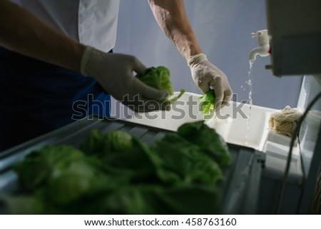 Man washes the leaves of salad