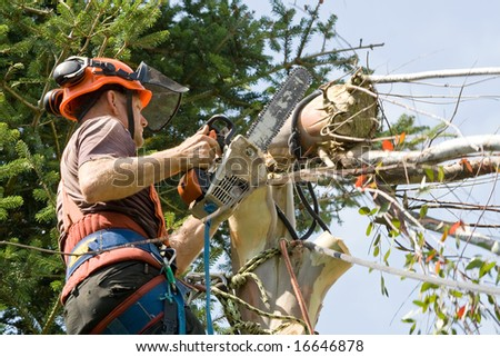 Man wearing harness, hard-hat and goggles using a chainsaw to cut the last of a tree - stock photo