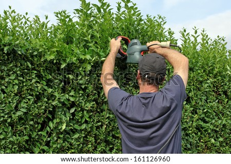 Man with a hedge trimmer - stock photo