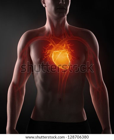Man with circulatory system anatomy - stock photo
