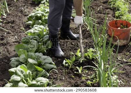 Man working garden with a hoe - stock photo