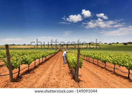 man working in a beautiful vineyard with blue sky - stock photo