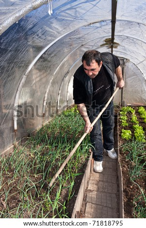 Man working in a real greenhouse. Lettuce and onion visible. Artistic selective focus. - stock photo