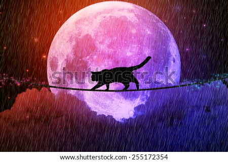 Managing risk business challenges uncertainty concept. Black cat walking on rope above clouds at full moon rainy dark night background. Dreamy skyline screen saver. Elements of image furnished by NASA - stock photo