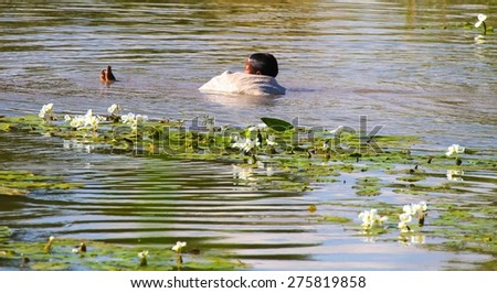 MANDALAY, MYANMAR - NOVEMBER 8: A young Burmese floating in a cotton shroud amidst a lotus pond in the village of Inwa outside of  Mandalay, Myanmar on the 8th November, 2012. - stock photo