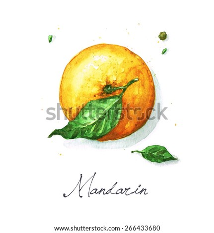 Mandarin - Watercolor Food Collection - stock photo