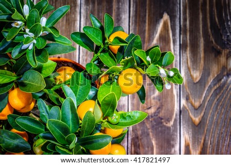 mandarine tree on a wooden background