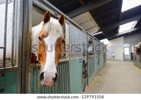 manege horse in stable - stock photo