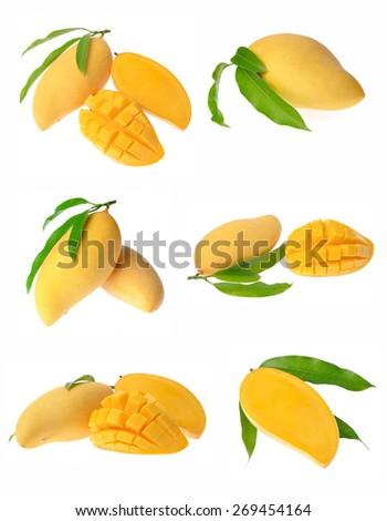 Mango collection - stock photo