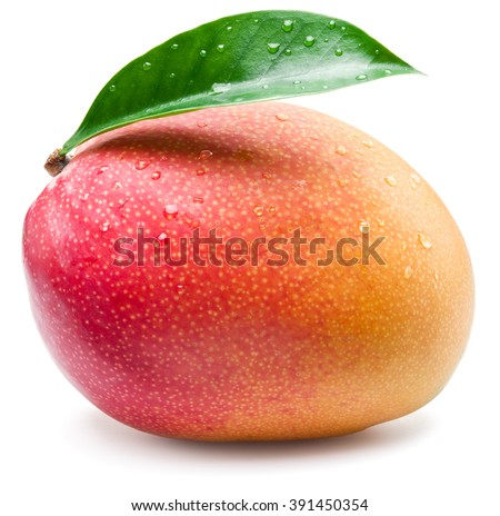 Mango fruit with water drops. Isolated on a white background. - stock photo