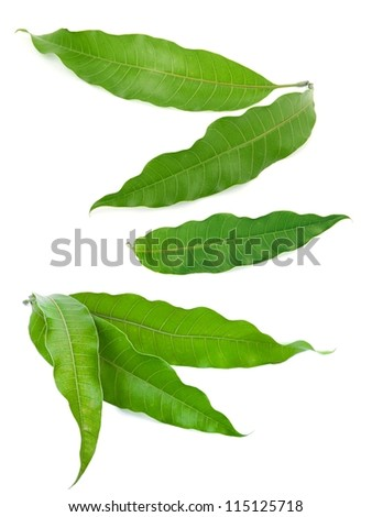 mango leaves - stock photo